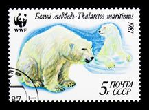 Polar Bear (Ursus maritimus), WWF serie, circa 1987 stock illustration