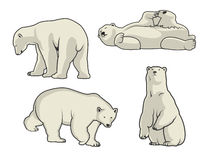 Polar bear vector illustration Royalty Free Stock Images