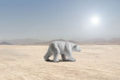Polar bear walking in a desert Royalty Free Stock Photography