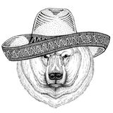Polar bear Wild animal wearing sombrero Mexico Fiesta Mexican party illustration Wild west. Wild animal wearing sombrero Mexico Fiesta Mexican party illustration Royalty Free Stock Photo
