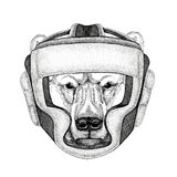 Polar bear Wild boxer Boxing animal Sport fitness illutration Wild animal wearing boxer helmet Boxing protection Image. Wild boxer Boxing animal Sport fitness Stock Photography