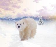 Polar bear winter Royalty Free Stock Photos