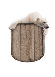 Polar bear with a wooden sign Stock Photography