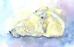 Polar bear and young bear Royalty Free Stock Image