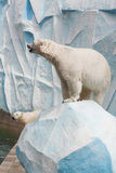 Polar bear in a zoo Royalty Free Stock Photos