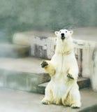 Polar bear in zoo. Polar bear in russian zoo Stock Images