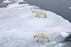 Polar bears Royalty Free Stock Images