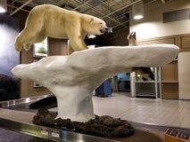 Polar bears hunt seals Royalty Free Stock Photography