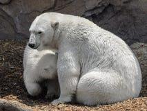 Polar bears - mother and child Stock Photos