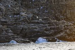 Polar Bears on a Remote Island in the Arctic. Near Baffin Island in Nunavut, Canada Stock Photography