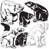 Polar bears. Set vector images of polar bears Royalty Free Stock Images