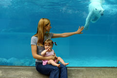 Polar bears at the zoo. Mother and daughter watching polar bears at the zoo Stock Images