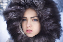 Polar beauty Stock Photos