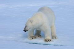 Polar betreffen Sie das Eis Stockfoto