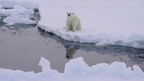 Polar betreffen Sie das Eis stock video