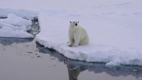 Polar betreffen Sie das Eis stock footage