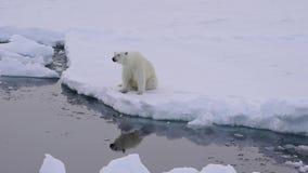 Polar betreffen Sie das Eis stock video footage