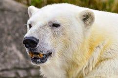 Polar betreffen Sie Felsen Lizenzfreie Stockbilder