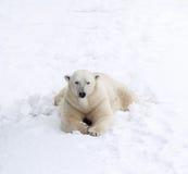 Polar betreffen Sie Schnee Lizenzfreies Stockfoto