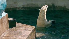 Polar betrifft gewaschen herauf Pottwal stock video