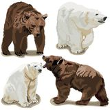 Polar and brown bears Royalty Free Stock Images