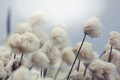 Polar flowers Royalty Free Stock Images