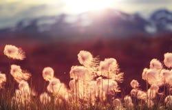 Polar flowers Stock Photos