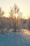 Polar forest Royalty Free Stock Images