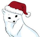 Polar fox with Christmas hat Stock Photo