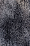 Polar fox fur gray or blue texture Stock Photography