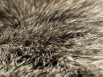 Polar Fox fur, useful as background Royalty Free Stock Image