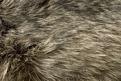 Polar Fox fur. Useful as background Royalty Free Stock Images