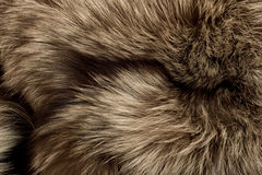 Polar Fox fur. Useful as texture Royalty Free Stock Images