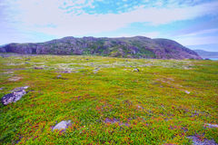Polar hills Scandinavian tundra in summer Royalty Free Stock Images