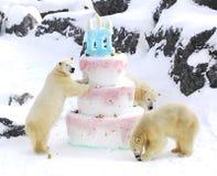 polar jätte för björnfödelsedagcake Arkivfoton