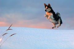 Polar kangaroo. stock photography