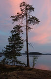Polar Karelia sunset with pine tree,Russia Stock Image