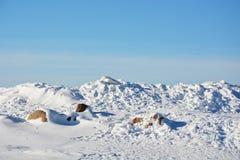 Polar landscape Royalty Free Stock Image