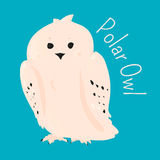 Polar owl . Stock Photography