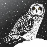 Polar owl. And snowfall. Vector format vector illustration