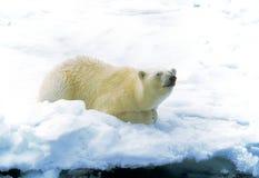 Polar refiera el hielo Foto de archivo libre de regalías