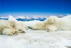 Polar refiere nieve Foto de archivo libre de regalías