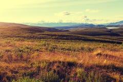 Polar tundra. Tundra landscapes above Arctic circle Royalty Free Stock Image