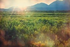 Polar tundra Royalty Free Stock Photo
