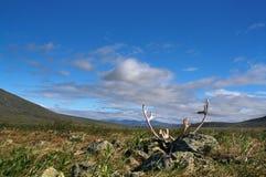 Polar Ural Mountains Stock Photography