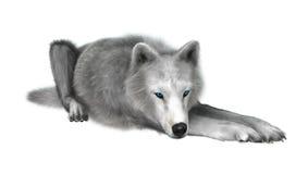 Polar varg på vit Royaltyfri Bild
