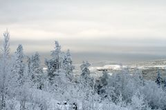 Polar Winter landscape. Trees under snow after snow-storm, mountains, evening Stock Photo