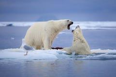 Polara Deul Arkivfoton