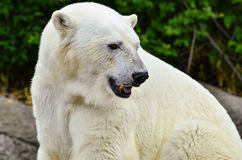 Polare riguardi le rocce Immagini Stock Libere da Diritti