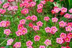 Polarer Blumenteppich Stockfotografie